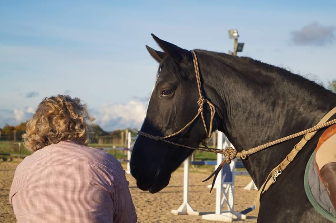 équitation éthologique dordogne (5)